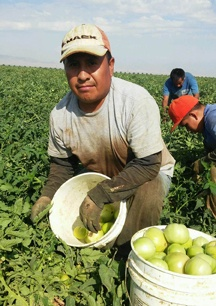 ufw the official web page of the united farm workers of america